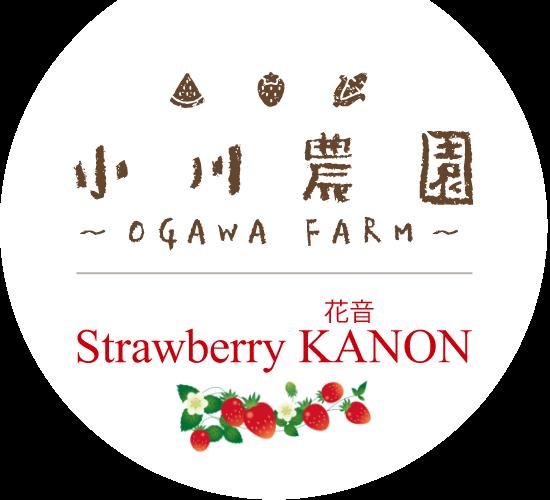 小川農園 ~OGAWA FARM~|Strawberry KANON(花音)|滋賀県近江八幡市 大中 いちご狩り・直売/大中スイカ直売
